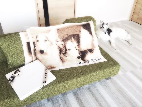 my dog memorial goods