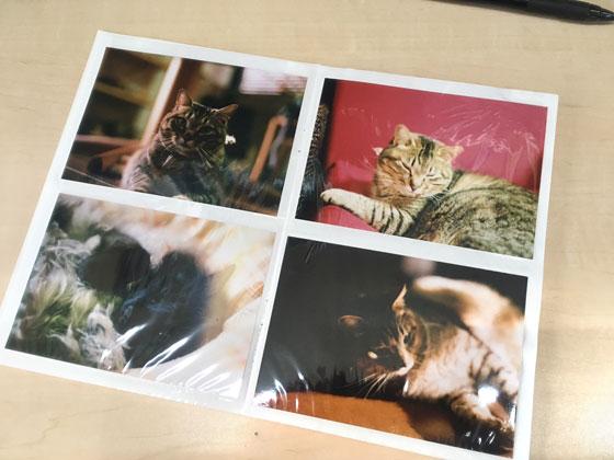 pet's photo album