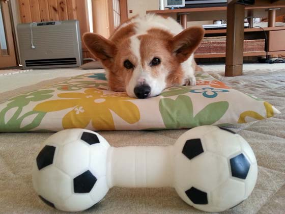dog's toy