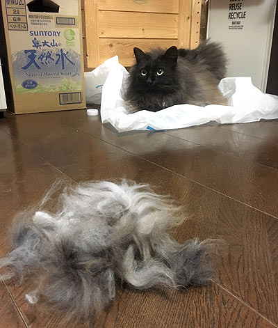 cat's hair